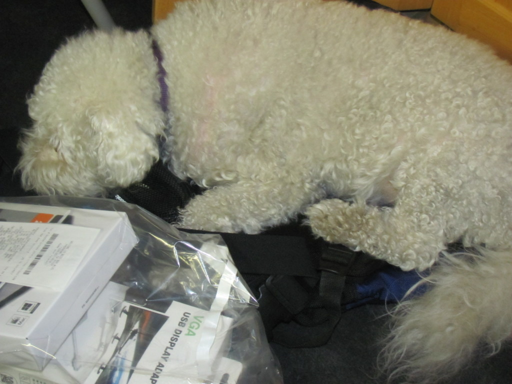 A white fluffy dog sleeping on a backpack.