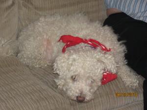 Pepper the Dog in a bandana