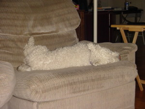 Dog on the Couch.