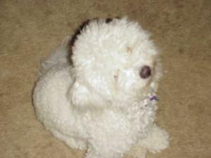 Head tilted puppy