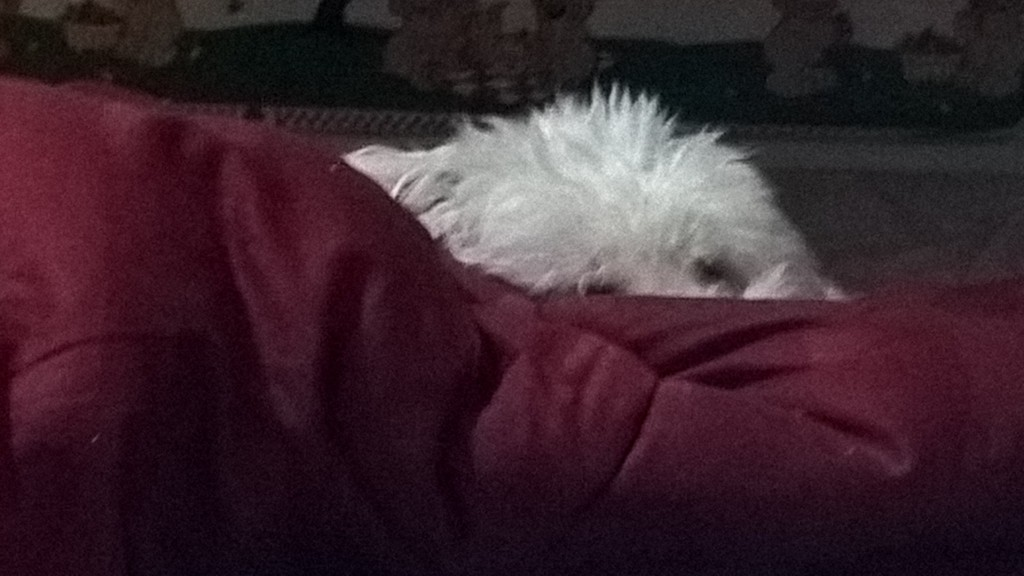 Fluffy Puppy spying on me from behind her wall of blanket