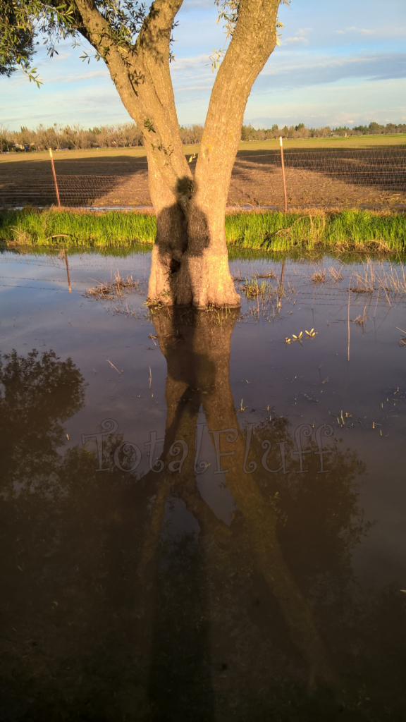 Shadow on a tree reflected in a mud puddle